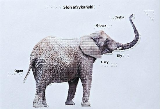 Wydruk w brajlu z grafiką - Słoń